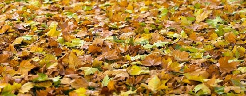 fall-lawn-care-tips-texas