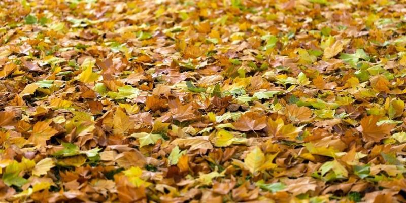 fall-lawn-care-tips-texas