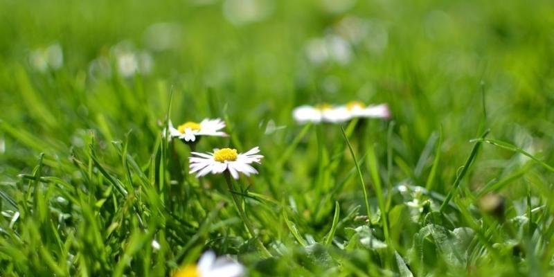 spring-lawn-fertilization-texas