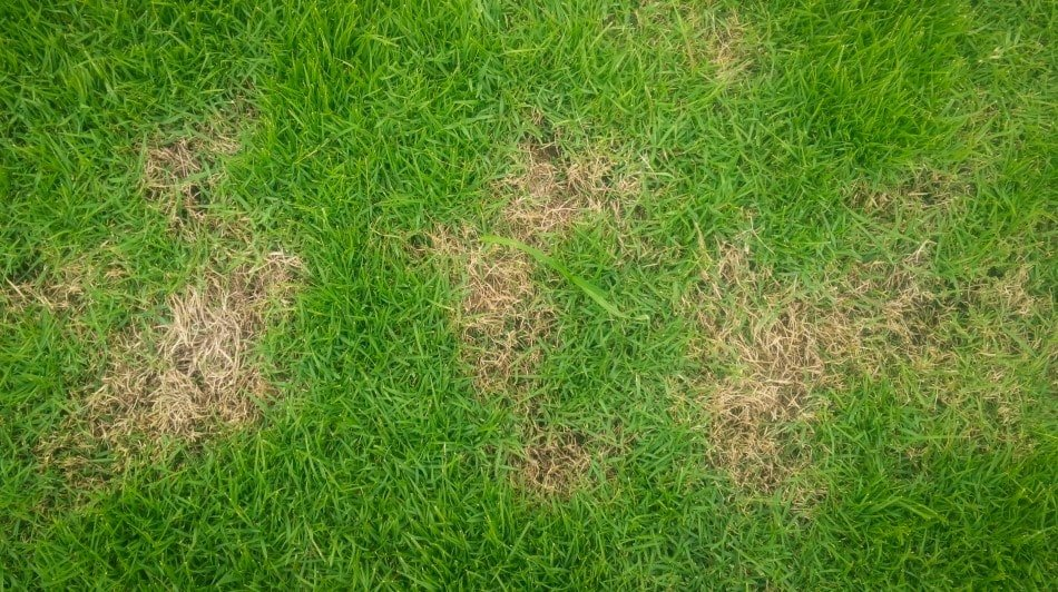 get rid of brown patch