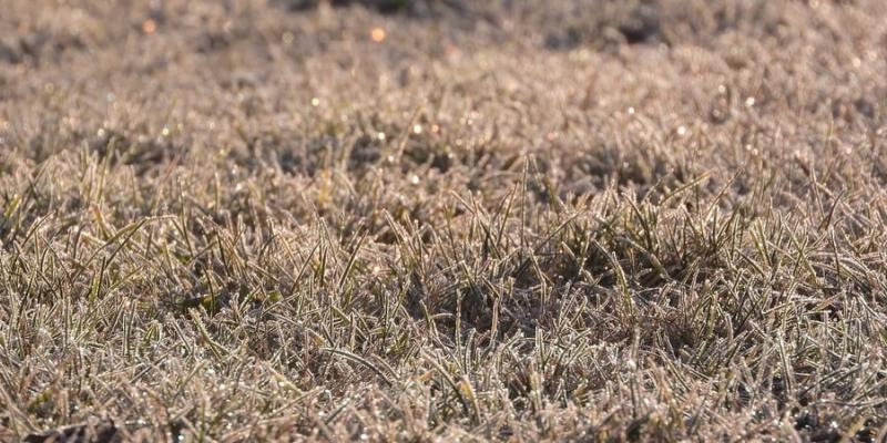 brown grass in the winter