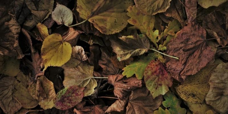 mulch your leaves into lawn