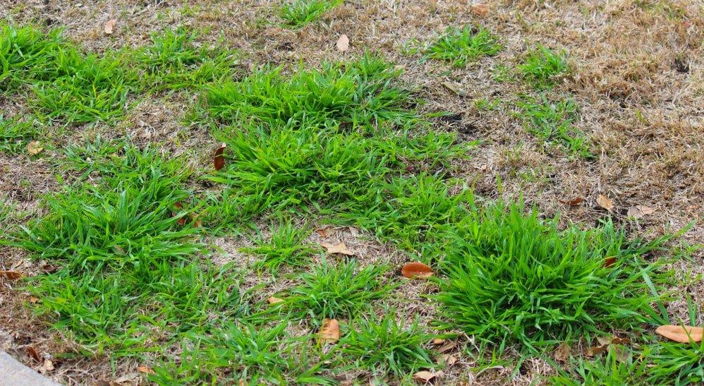 rescue grass weeds