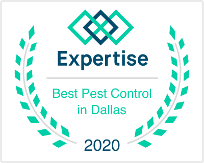 expertise pest control dallas