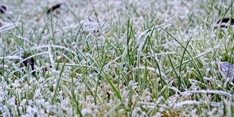 frost damage on lawn