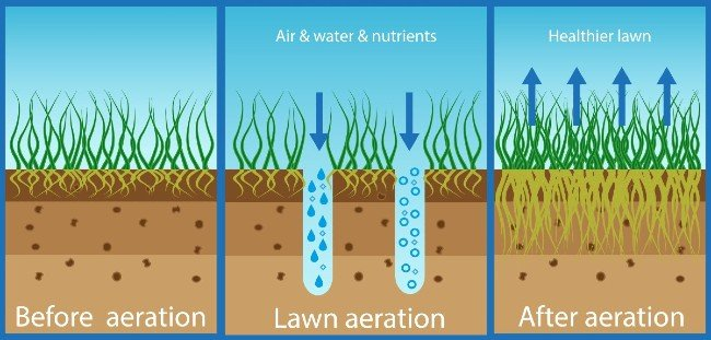 lawn aeration benefits