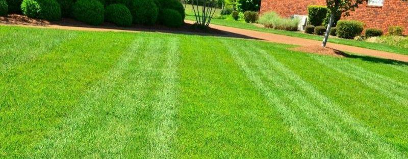 lawn care company