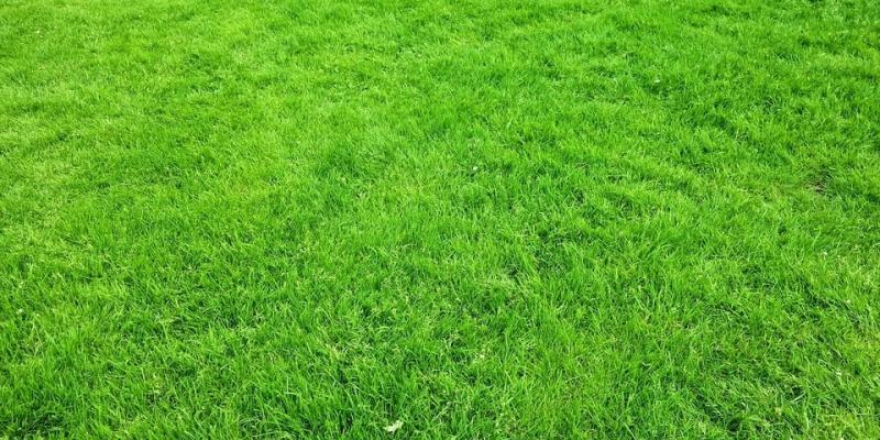 what is lawn aeration