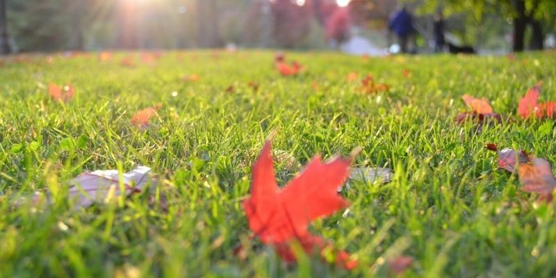 aerate-your-lawn-this-fall