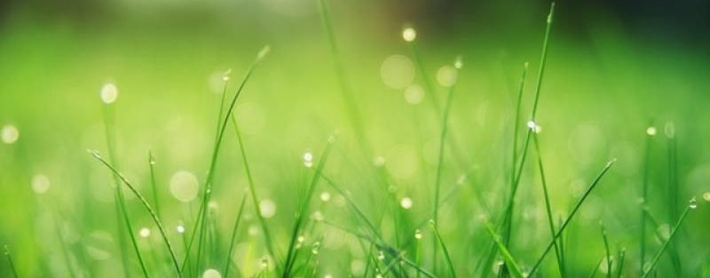 signs-of-lawn-stress-texas
