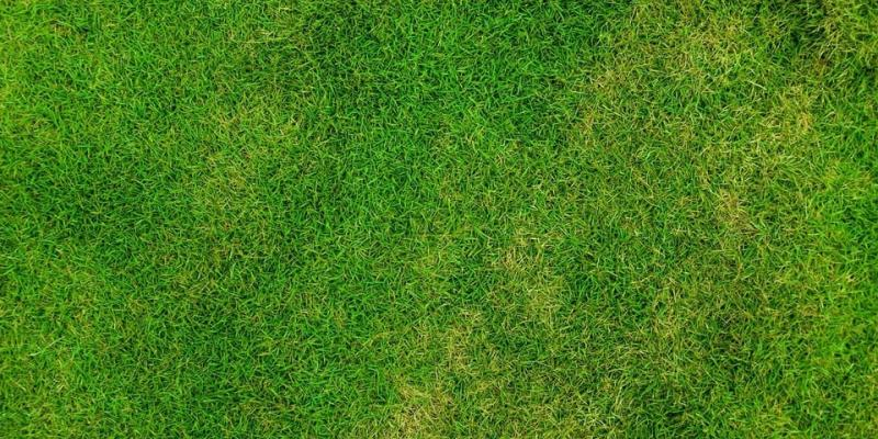 brown patches on lawn