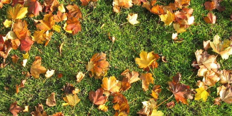 fall lawn fertilization