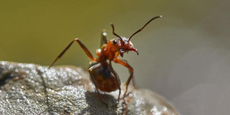 ant in your plants