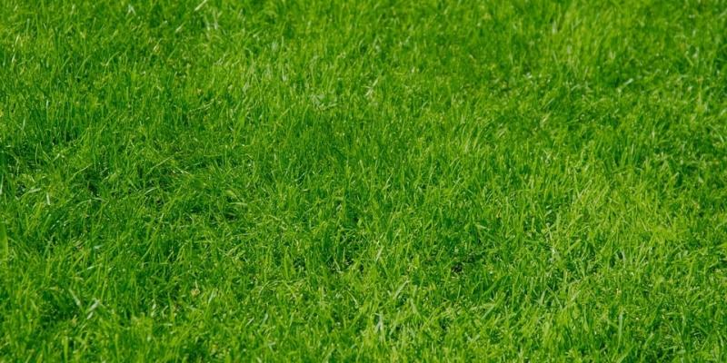 lawn-care-tips-beginners
