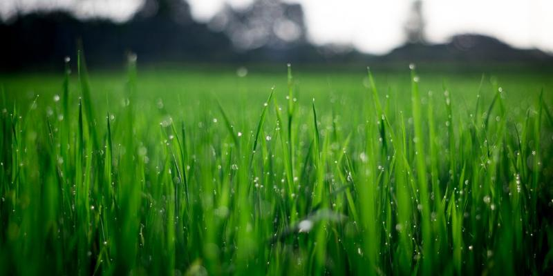 lawn care winter