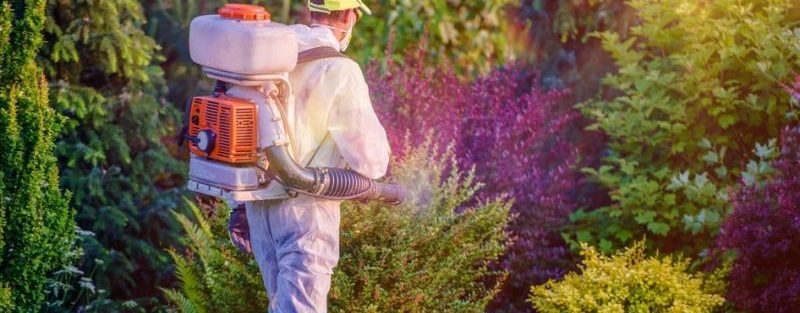 mosquito control service dallas