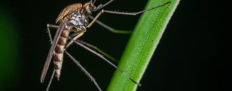mosquito treatment for yard