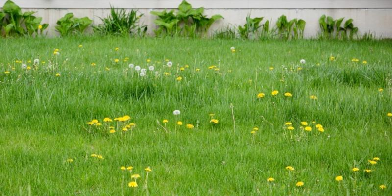 pre-emergent weed control