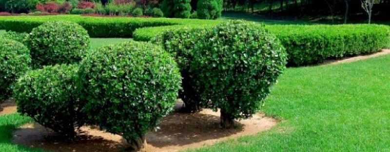 tree-shrub-care-program-texas