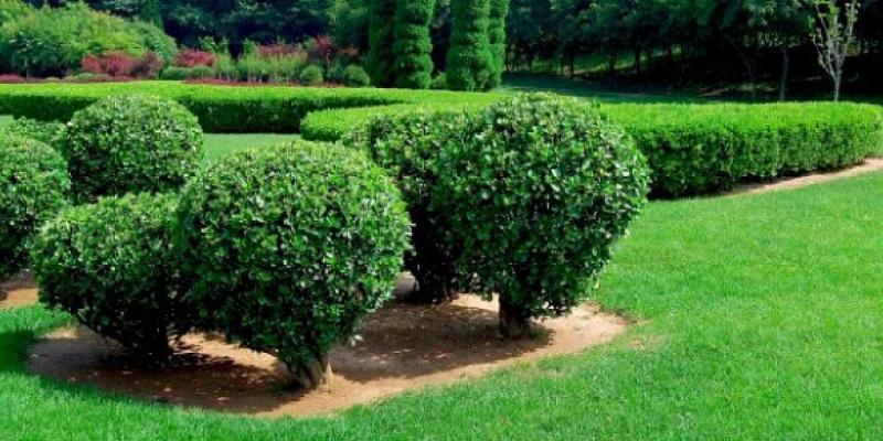 tree-shrub-care-program-texas