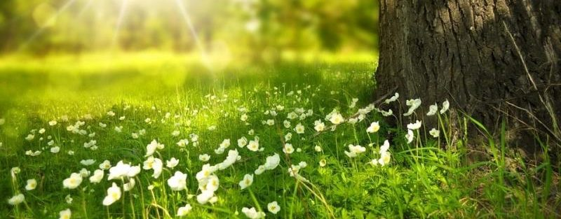 tree-shrub-care-tips