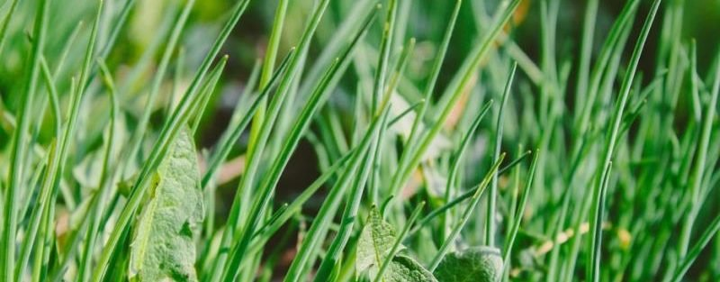 weed control tips coppell tx