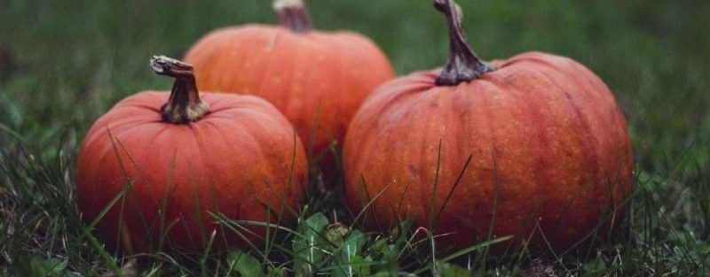 halloween lawn care