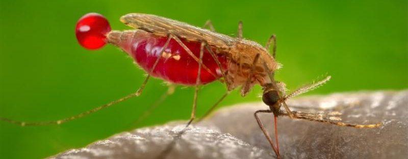 mosquito problem