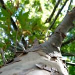 How to Tell If Your Tree is Dead or Diseased?
