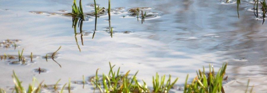 improve drainage lawn