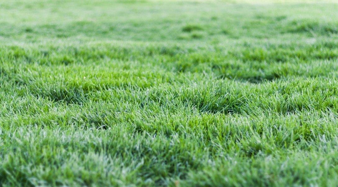 lawn care myths