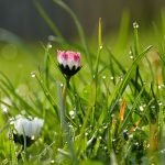 5 Ways a Super Wet Spring Can Impact Your Lawn