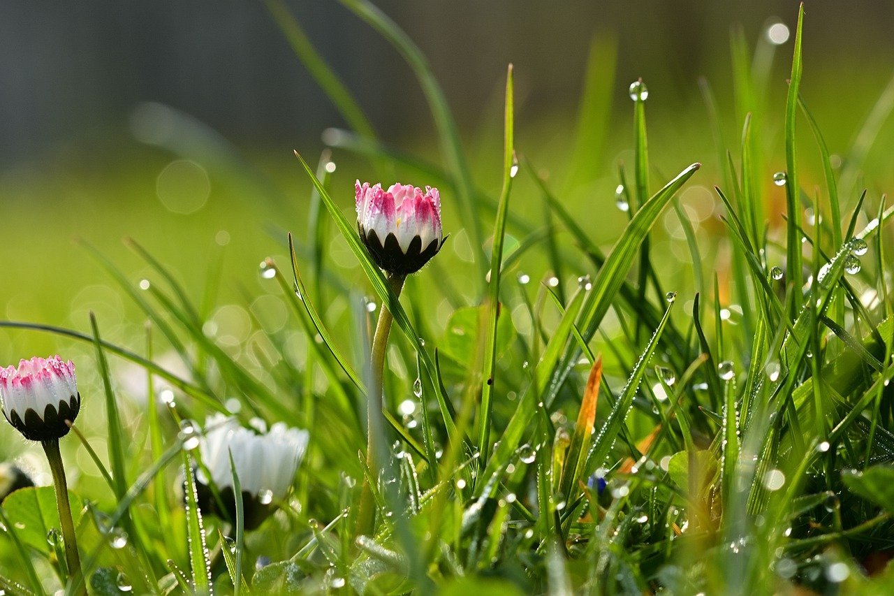 wet lawn in spring