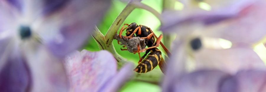 paper wasp in flowers