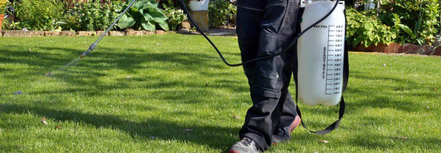 spray lawn weeds