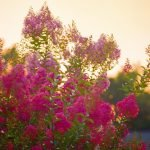 Drought Tolerant Plants for North Texas
