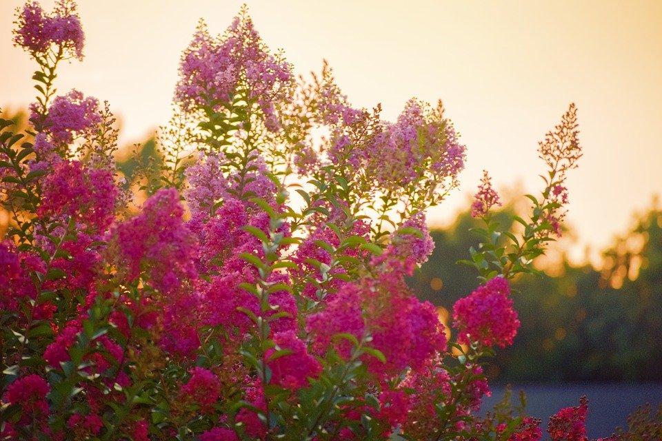 drought tolerant plant
